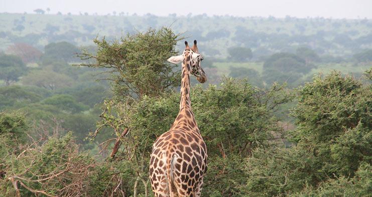 Classic Africa Safari in Uganda