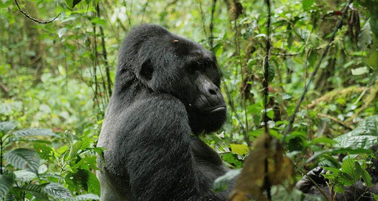 Highlights Of East Africa Safari