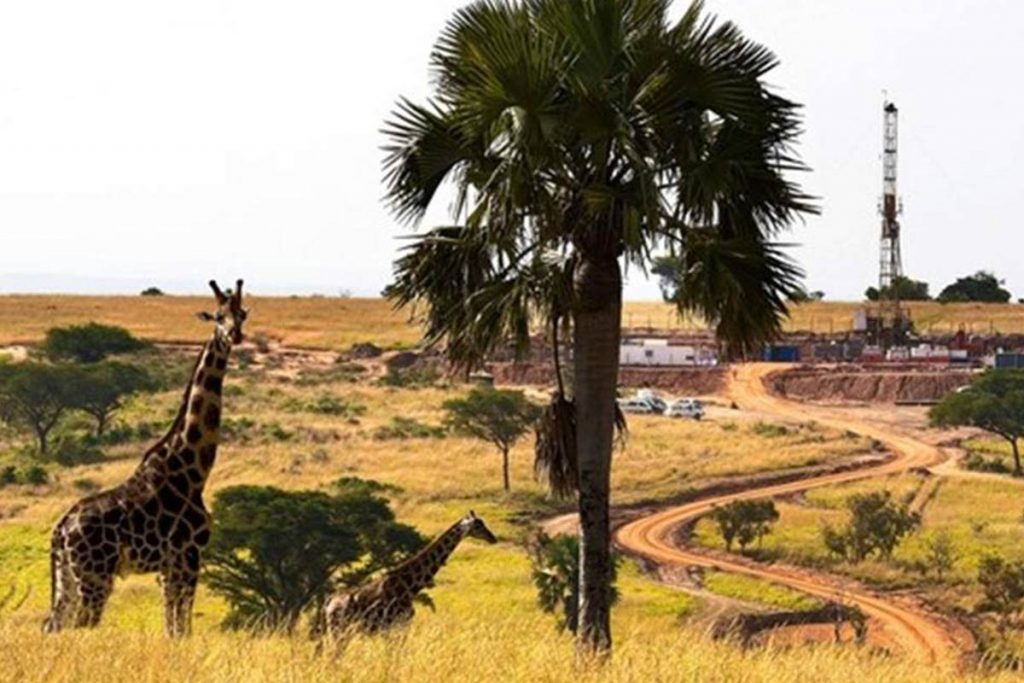 Conservation and the License to drill in Uganda
