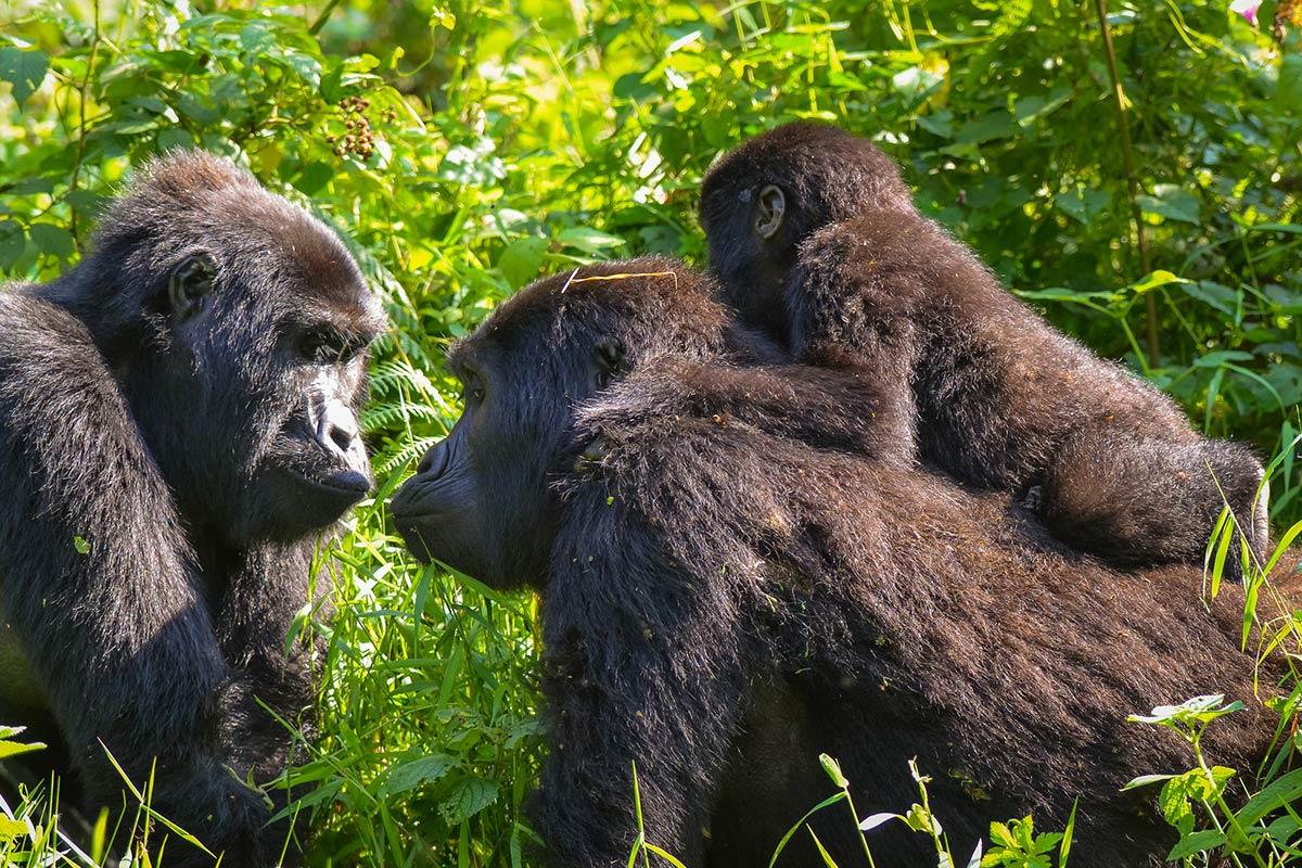 gorilla meetup exchange
