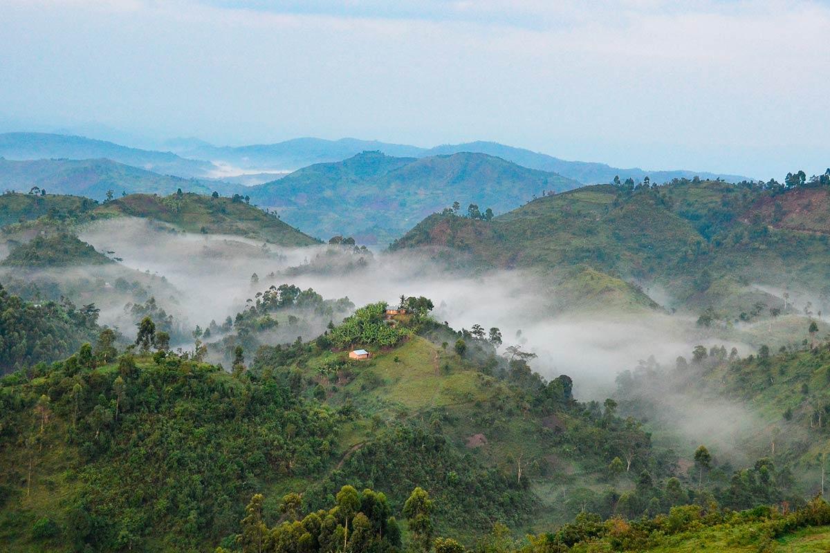 Bwindi Impenetrable National Park in Uganda.