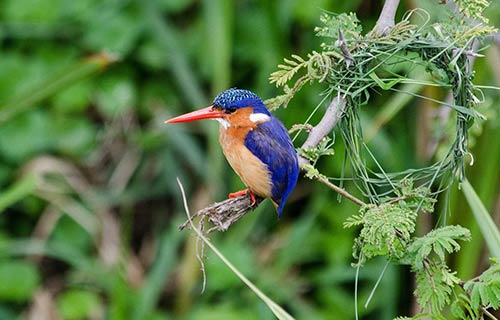 Bird Watching in Uganda