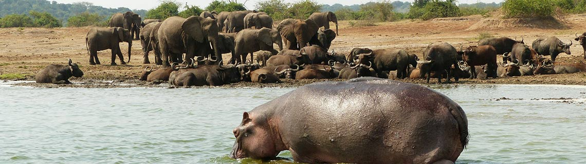 Top Uganda Destination - Queen Elizabeth National Park