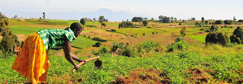 Uganda safaris agriculture