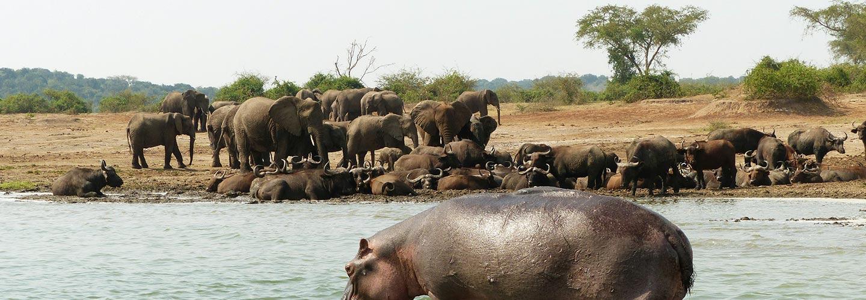Uganda safaris nature trek